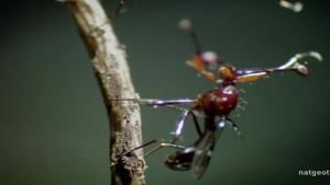 Miniature Insect World photo
