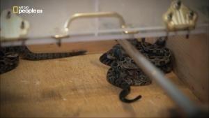 La setta del serpente - Trucchi del mestiere foto