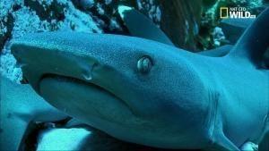 L'isola degli squali foto