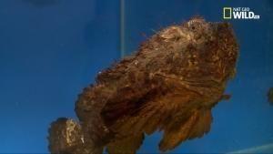 Animali mortali: Australia - Creature sanguinarie foto