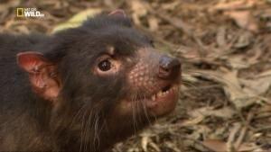 Animali mortali: Australia - Un morso potentissimo foto