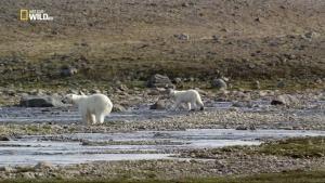 Wild Canada - Terre di ghiaccio foto