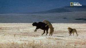 Vendetta animale - Prede al contrattacco foto