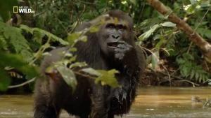 L'amore passionale delle scimmie foto
