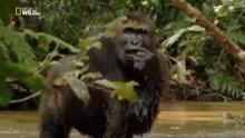 L'amore passionale delle scimmie programma