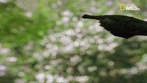 Gli ultimi paradisi: i rettili volanti foto