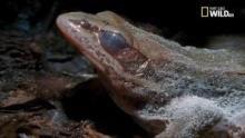 Gli ultimi paradisi: il disgelo della rana programma