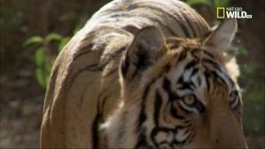La leggenda delle tigri sorelle - Star e Sondali foto