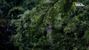 Foreste, regni selvaggi foto