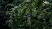 Foreste, regni selvaggi programma