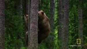 Baby Bear Tree Huggers photo