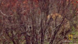 Impala Cheats Death photo
