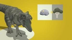 Dentro il T-Rex - videoinfografica foto