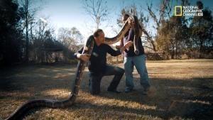 Il Titanoboa, un serpente gigante foto