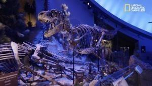 Le capacità rigenerative del T. Rex foto