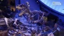Le capacità rigenerative del T. Rex programma
