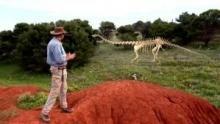 Il dinosauro più grosso mai esistito programma
