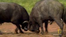 Deadly Buffalo show