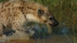 Gli animali più pericolosi dell'Africa foto