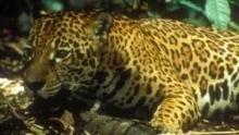 I predatori dell'Amazzonia programma
