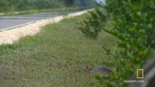 Everglades Egg Bandit show