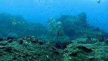 Undersea Life show