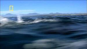 Sharkville photo