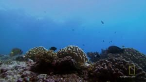 Coral reefs photo