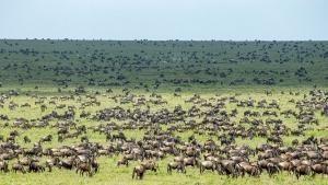 Mygrations - Quer durch die Serengeti: Trailer Video