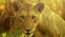 إعادة الحياة لمملكة إفريقيا البرية برنامج
