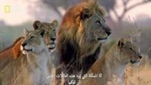 المملكة المتوحشة برنامج