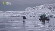 Continent 7: Antarctica show