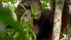 مملكة بورنيو السرية - غابة الثعابين الطائرة صورة