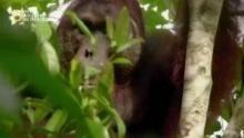 مملكة بورنيو السرية - غابة الثعابين الطائرة برنامج