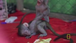 Vervet Monkey Play Date photo
