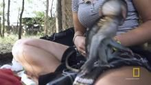 Monkey Socializing Behavior show