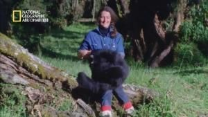 Dian Fossey: Secrets in the Mist photo