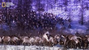 Wild Russia photo