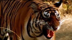 شب نبرد حیوانات ویدئو