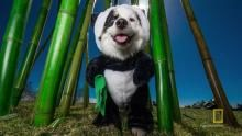 Pandaloon Photo Shoot show