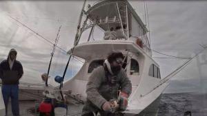ماهی تن شرور: شمال در برابر جنوب عکس