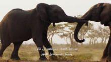 براري إفريقيا برنامج