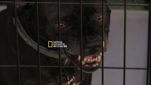 Dog: Impossible photo