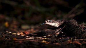 Snake Week photo