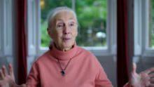 Jane Goodall: The Hope show