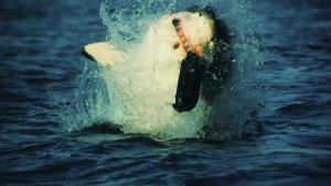 Killer Animal Tactics photo