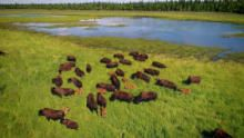 Saving Wild Alaska show