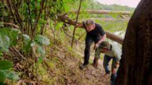 الغابة البرية في غيانا برنامج