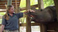 أسرار حديقة الحيوان - تامبا برنامج