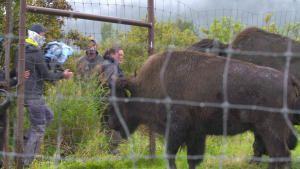 عمليات إنقاذ حيوانات ألاسكا صورة